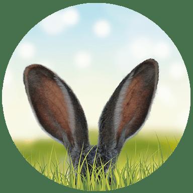 projekt ogrodu dostosowany do potrzeb klienta