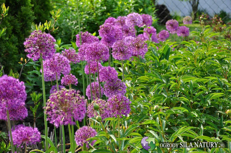 piękny zadbany ogród na śląsku