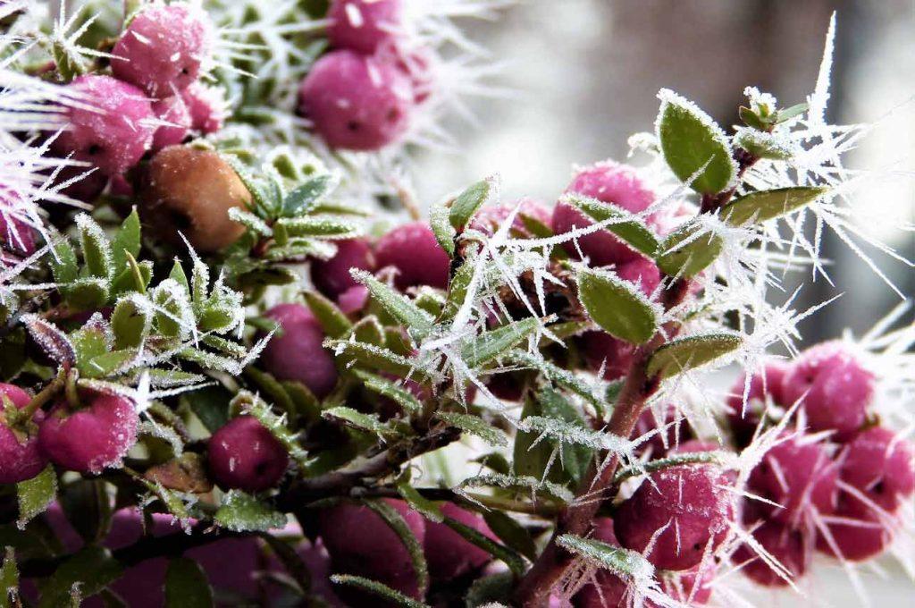 Rośliny ozdobne zimą – Top 20